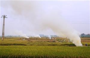 Hà Nội: Sắp có biện pháp xử lý triệt để tình trạng đốt rơm rạ