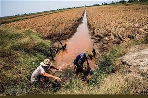 Chuyên gia đưa giải pháp gì chống hạn, xâm nhập mặn cho Đồng bằng sông Cửu Long